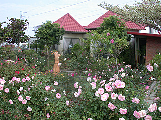 Imagination Rose Garden